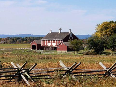 codori-farm